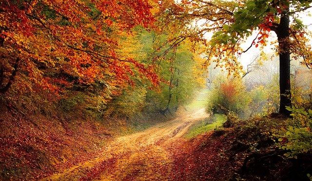 Jak jesienią chronić zdrowie?